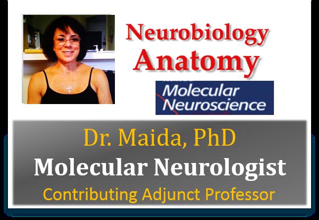 Dr.-Maida-PhD-Molecular-Neurologists-Armageddon-Weight-Loss-Best-weight-loss-DVD-program-for-wome